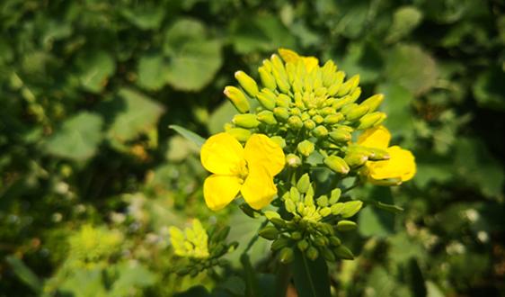 索尔维高阻隔性保护膜Diofan保护药物不受侵袭